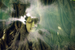Aura lighting from Buddha. Aura lighting coming out from Buddha in the tree roots Stock Photos
