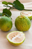Aurantium Linn do citrino, laranja ácida ou laranja amarga Foto de Stock Royalty Free