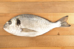 Aurata fish Stock Photos