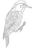 Pájaro septentrional del parpadeo libre illustration