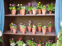 An Auricula theatre on display Royalty Free Stock Image
