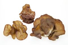 Auricularia auricula-judae Royalty Free Stock Images