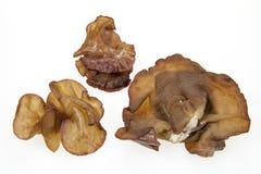 Auriculariaauricula-judae Royaltyfria Bilder