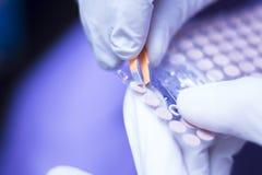 Auriculartherapy耳朵种子处理 库存图片