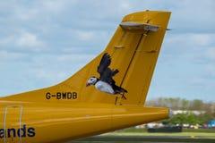 Aurigny tail Stock Photos