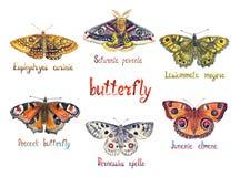 Aurinia van moeras fritillary Euphydryas, Saturnia-pavonia, Lasiommata-megera, de Pauwvlinder, de Apollo en Junonia-almana royalty-vrije illustratie