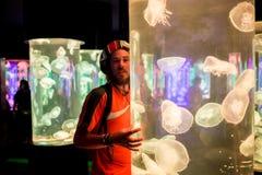 Aurita van Aurelia van maankwallen in een aquarium Royalty-vrije Stock Afbeeldingen