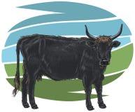 Aurochs Stock Image