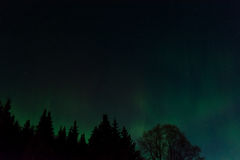 Aurora and Big Dipper. Auroras dance under the Big Dipper and over a dark forest Stock Image