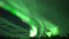 Aurora boreal del aurora borealis en Whitehorse, Canadá almacen de video