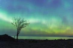 Aurora boreal e árvore só em St Patrick & em x27; dia de s Fotografia de Stock Royalty Free