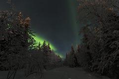 Aurora boreal na floresta spruce Fotografia de Stock Royalty Free