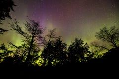 Aurora boreal que dança através do céu que mostra em silhueta árvores pretas Fotos de Stock Royalty Free
