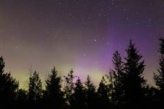 Aurora boreal sobre bosque fotografía de archivo libre de regalías