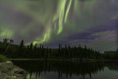 Aurora Borealis über Kiefern Stockfotografie
