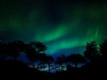 Aurora borealis. Beautiful aurora borealis over the forest Stock Images
