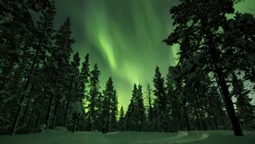 Aurora borealis above trees in Finnish forest. Saariselka. royalty free stock photography