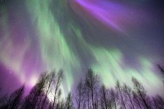 Aurora borealis above treetops. Northern lights, Aurora borealis above birch forest treetops Stock Photography