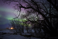 Aurora borealis behind bare tree branches. In a night star studded sky Royalty Free Stock Photo