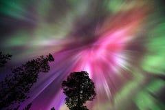 Aurora Borealis-corona boven bosbomen stock afbeelding
