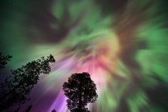 Aurora Borealis-corona boven bosbomen royalty-vrije stock foto's
