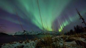 Aurora borealis costero sobre Noruega