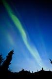 Aurora borealis de la aurora boreal de la picea del taiga del Yukón Foto de archivo libre de regalías