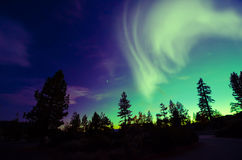 Aurora borealis de la aurora boreal sobre árboles Imagen de archivo libre de regalías