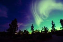 Aurora borealis de lumières du nord au-dessus des arbres Image libre de droits