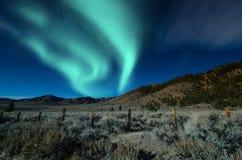 Aurora borealis de lumières du nord au-dessus des arbres Photo stock