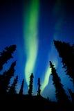 Aurora borealis de lumières du nord de sapin de taiga du Yukon Image stock