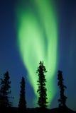 Aurora borealis de lumières du nord de sapin de taiga du Yukon Photographie stock libre de droits