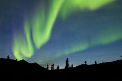 Aurora borealis de lumières du nord de sapin de taiga du Yukon Photo stock