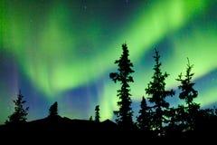 Aurora borealis de lumières du nord de sapin de taiga du Yukon Photographie stock