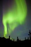 Aurora borealis de lumières du nord de sapin de taiga du Yukon Image libre de droits