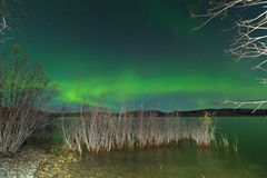 Aurora borealis display Lake Laberge shore willows Stock Photo
