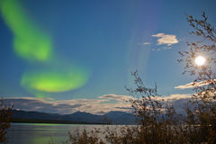 Aurora borealis full moon over Lake Laberge Yukon. Green northern lights, Aurora borealis, on night sky with full moon and stars over boreal forest taiga of Lake Royalty Free Stock Images