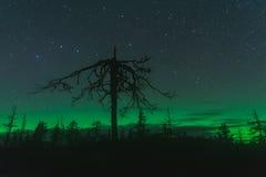 Aurora borealis, Karelia, Russia. Aurora borealis,Vottovaara mountain, Karelia, Russia Royalty Free Stock Photos