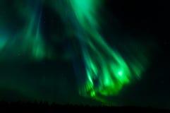 Aurora borealis in kattisberg, Zweden Royalty-vrije Stock Foto