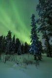 Aurora borealis (lumières du nord) forêt en Finlande, Laponie Photos libres de droits