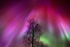 Aurora Borealis, Noordelijke lichten, boven de winterbos royalty-vrije stock afbeelding