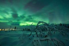 Aurora borealis (Noordelijke Lichten) het bos in van Finland, Lapland Stock Afbeeldingen