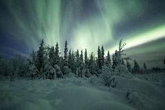 Aurora borealis (Nordlichter) in Finnland, Lappland Wald Stockbild
