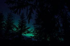 Aurora borealis northern light on winter night sky over trees Stock Image