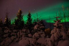 Aurora Borealis/Northern lights above Icelandic snow covered forest stock images