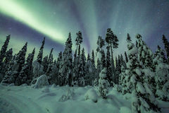 Aurora borealis (Northern Lights) in Finland, lapland forest Royalty Free Stock Photos