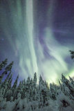 Aurora borealis (Northern Lights) in Finland, lapland forest Royalty Free Stock Photography