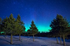 Aurora borealis over conifer forest in Perce royalty free stock images