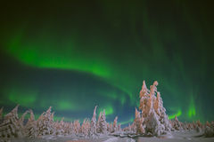 Aurora Borealis over the forest. Winter Landscape with aurora Borealis over the forest and road Stock Images