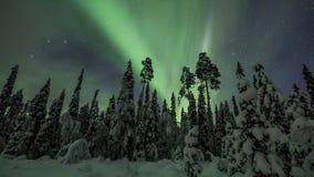 Aurora borealis over Lapland forest in Finland